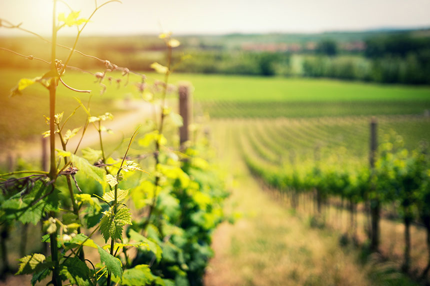 The best investment wines come from Bordeaux in France.
