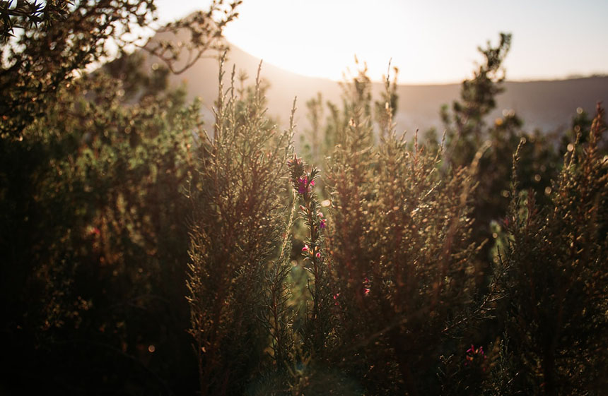 protecting fynbos with sustainable carbon neutral wine formaing